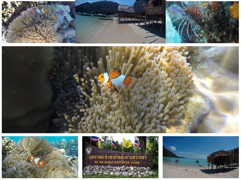 เที่ยวทะเลดำน้ำดูปะการัง-mookohsurin