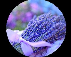 lavender_350